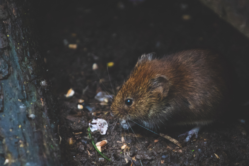 Combating pest control problems on building sites